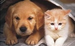Will County offers residents spay/neuter discount for pets in February